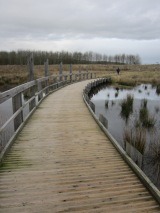 Brockholes Nature Reserve, near Preston