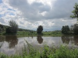 River Ribble and the Epic Journey of the EuropeanEel