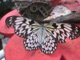Butterfly House, Williamson Park,Lancaster