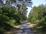 Cycle Tracks through the LandesForest