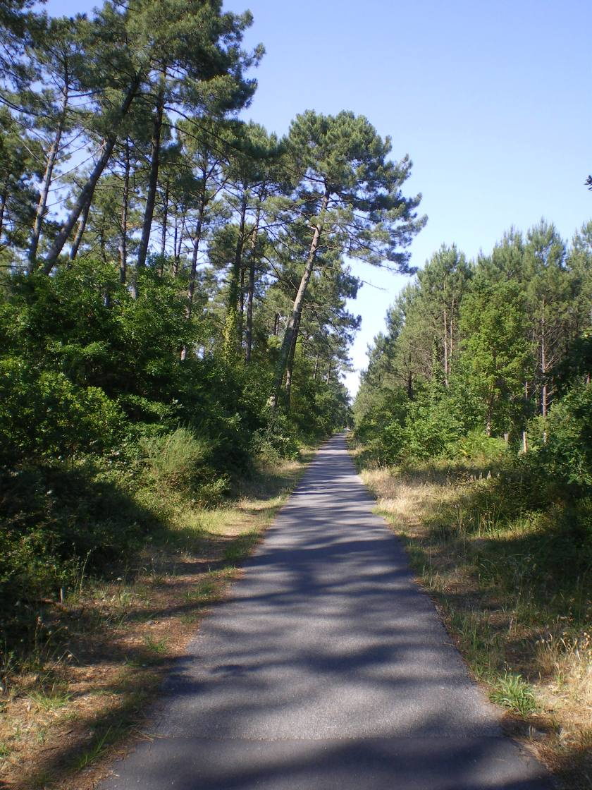 Cycle Path Landes Forest