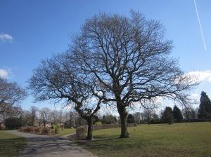 Haslam Park