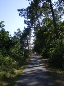 Cycle track through Landes Forest