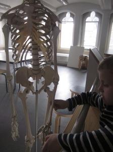 Bone-apart