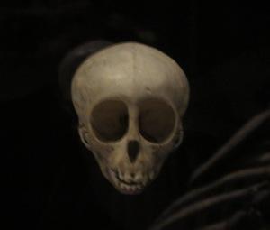 Monkey skull Manchester Museum