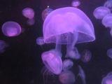 Les méduses…Jellyfish inFrance