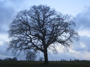 Ashton Park Tree