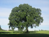 Same Tree, DifferentSeasons