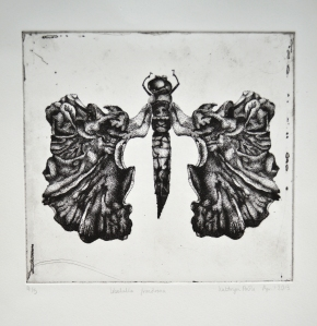 libellula frondossa by Kathryn Poole