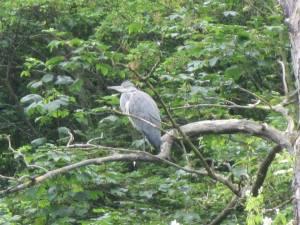 Heron Moor Park