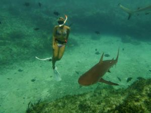 Diving with a Reef Shark.